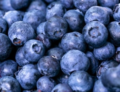 Blueberry, one of Activa's star ingredient for better blood circulation