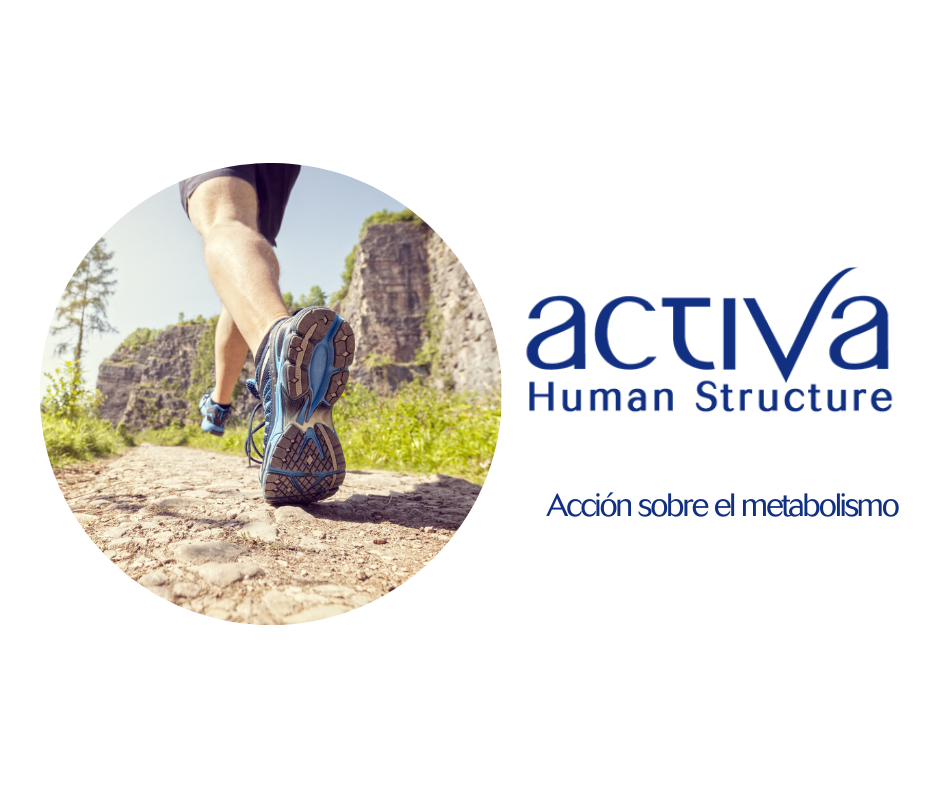 Activa Human Structure