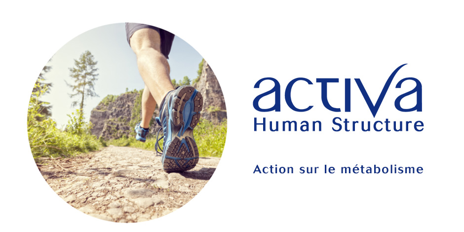 Activa Human Structure